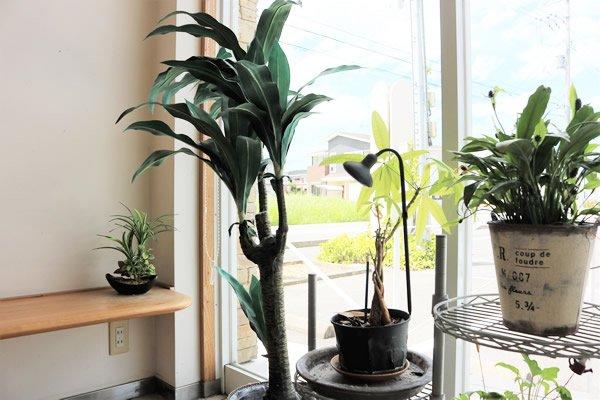 院内観葉植物